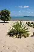 Cactus on a beach — Stock Photo