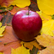 Apple against autumn leaves - Stock Photo