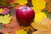 秋の葉に対してアップル — ストック写真