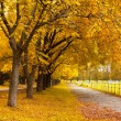 Stock Photo: Autumn in a park