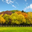 Autumn trees over the blue sky - Stock Photo