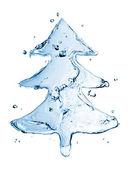 水溅到白色上孤立杉木树 — 图库照片