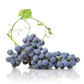Blue grape with green leaf isolated on white — Stock Photo