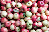 Backgound from apples — Stock Photo