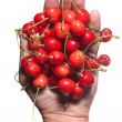 Hand holding red cherry isolated on white - Zdjęcie stockowe