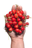 Hand holding red cherry isolated on white — Stock Photo