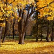 Stock Photo: Autumn trees in the park