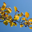 Autumn leaves against blue sky — Stock Photo #4225342