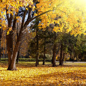 Autumn trees in the park — Stock Photo