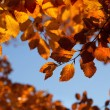 Background with autumn leaves — Stock Photo