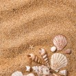 Frame from various shells on sand - Stock Photo