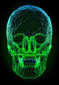 Abstract colorful skull shape — 图库照片