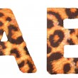 Royalty-Free Stock Photo: Leopard fur A and B letters isolated