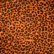 Leopard skin background or texture — Stock Photo