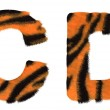 Tiger fell C and D letters isolated — Stock Photo