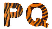 Tiger fell P and Q letters isolated — Stock Photo
