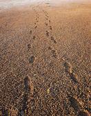 Huellas en la arena — Foto de Stock