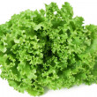 Curly lettuce — Stock Photo