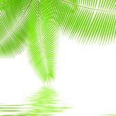 Palm branches — Stock Photo