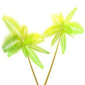 Two palm — Stock Photo