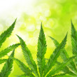 Stock Photo: Green marijuanleaves