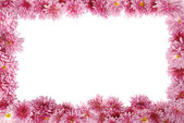 Floral frame on white — Stock Photo