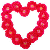 Valentines Day Rose Heart — Stock Photo