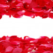 Royalty-Free Stock Photo: Rose Petal Border