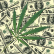 Sheet of a hemp. Background of money — Stock Photo