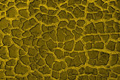 Cracky old green textures — Stock Photo