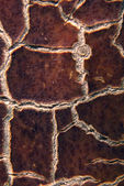 Cracky old brown textures. Close-up — Stock Photo