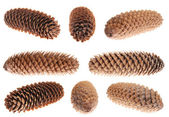 Eight pine cone — Stockfoto