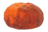 Verfaulte orange — Stockfoto