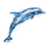 Jumping water dolphin — Stock Photo