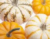 Festive Pumpkin Background — Stock Photo