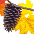 图库照片: Pine Cone and Fall Leaves