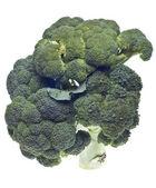 Tiges de brocoli en bonne santé — Photo