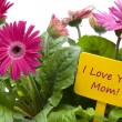 Stock Photo: Happy Mothers Day with Flowers