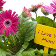 Happy Muttertag mit Blumen — Stockfoto