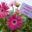 Happy Mothers Day with Flowers - Stock Photo