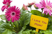 Gelukkige moederdag met bloemen — Stockfoto