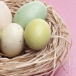 Colorful Eggs in Nest — Stock Photo