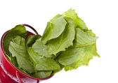 Fresh Romaine Lettuce Border Image — Stock Photo