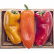 Three Colors of Vibrant Peppers — Zdjęcie stockowe