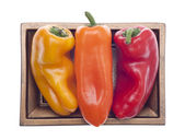 Three Colors of Vibrant Peppers — Stock Photo