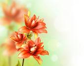 Frontera floral con lirio rojo — Foto de Stock