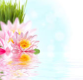 Pink lotus flower floating in water — Stock Photo