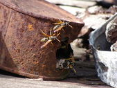 The wasps and the tin — Foto Stock