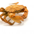 Stock Photo: Brown cooked crab