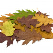 Pile of dirty fallen leaves — Stock Photo